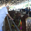 PM Narendra Modi visiting the Pashudhan Arogya Mela